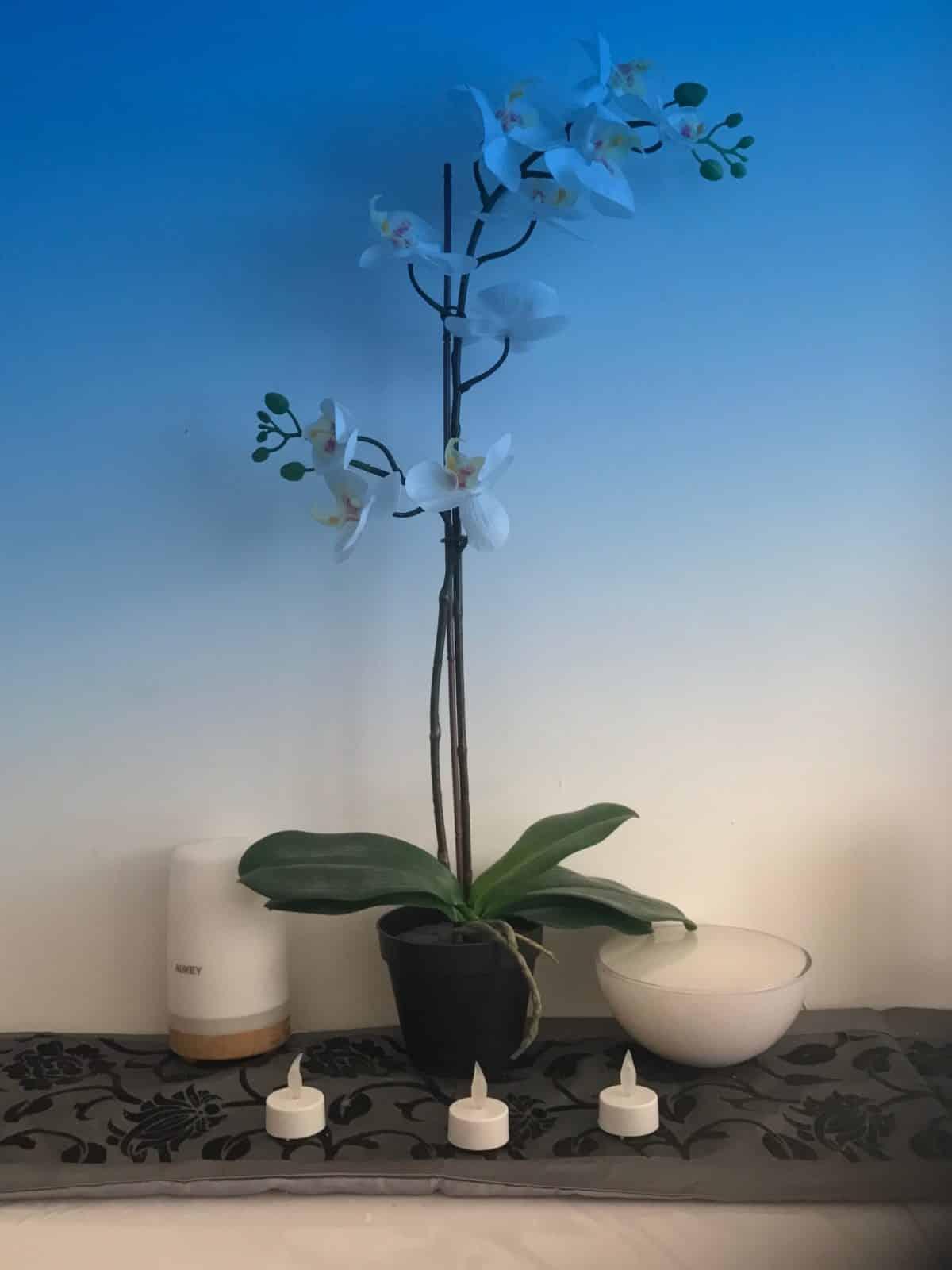 photo fleur filtre bleu